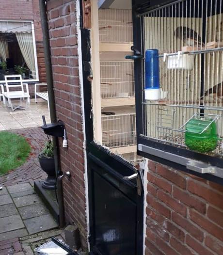 33 vogels gestolen in Losser