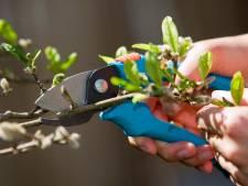 Gemeente Alphen zoekt mooiste tuin