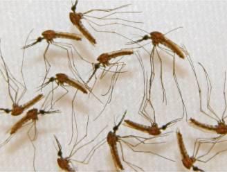 Malaria: wat is het juist, hoe herken je het en hoe vaak komt het voor bij ons?