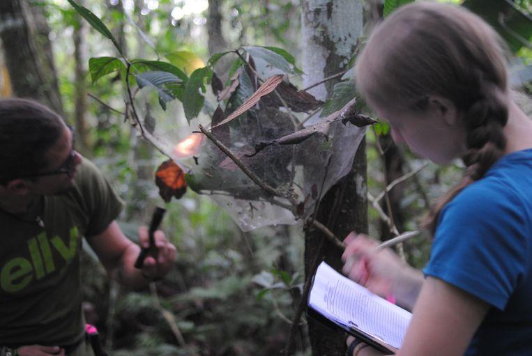 Philippe Fernandez-Fournier en Samantha Straus bestuderen een nest.