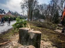 Tilburg wil strengere eisen voor kapvergunning, aanvrager moet noodzaak aantonen
