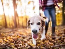Gemeente ontvangt 178 standpunten over hondenbeleid in Dordtse Biesbosch