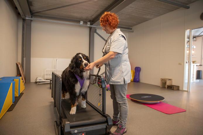 Dierenarts Iris van Deur in nieuwe dierenkliniek in Hoogeloon