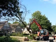 Bomen Hei-akker tegen de vlakte: 'Ze zijn mooi, maar maken alles kapot'