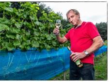 Nederlandse wijn schiet wortel