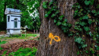 23 monumentale bomen in de Dreef met kap bedreigd omdat kerosinepijpleiding te dichtbij ligt