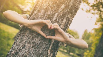 Meer Bomen in Roeselare bedeelt zaterdag gratis liefdesbomen