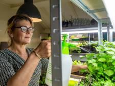 Een huis vol citroenkomkommers en dertig tomatensoorten: Vicky heeft een moestuinwalhalla