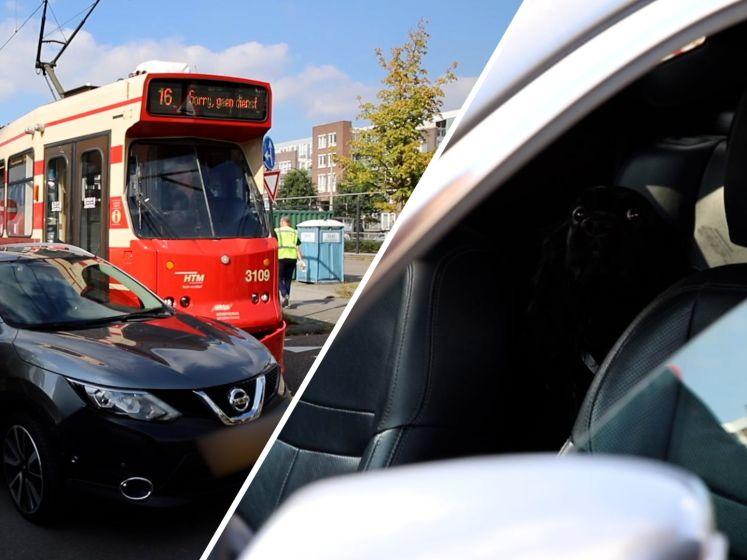 Automobilist laat hond achter na botsing met tram