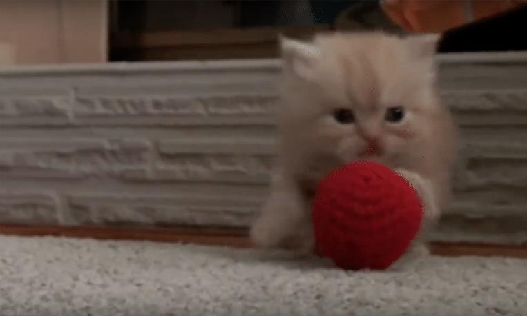 Wetenschappelijk bewezen: kattenfilmpjes maken gelukkig