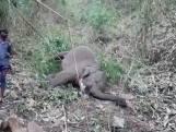 18 dode olifanten in India, vermoedelijk door blikseminslag