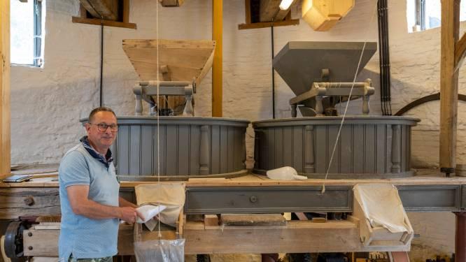 """REEKS UITSTERVEND RAS. Bart Aerts maakte switch van verzekeraar naar molenaar: """"Verliefd op alle techniek die bij molen komt kijken"""""""
