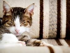 Nog 1 ton nodig voor kattenasiel in Oldenzaal