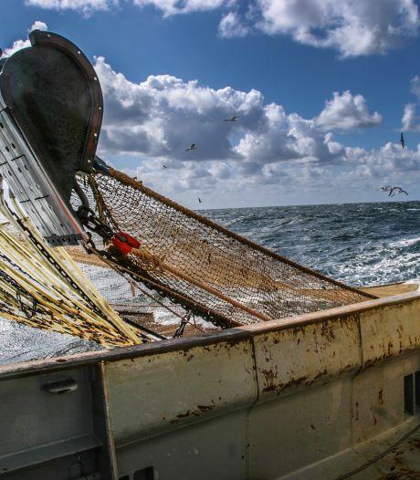 NVWA neemt ruim 26.500 kilo ondermaatse vis in beslag bij afslag op Urk: 'Dit is wel heel erg veel'