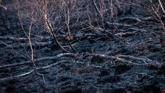 Minstens tien jaar tijd nodig om natuur te herstellen na brand Brecht