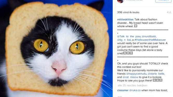 #hobby: Hobby's die beeldig staan op je Instagramaccount