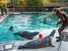 Tiergarten Kleef moderniseert: zeehondenbassin veel groter en aantal geiten stuk kleiner