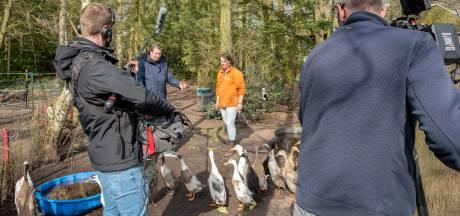 BinnensteBuiten filmt eenden en kippen in Ossendrecht, 'Ik wilde graag iets koken met eendeneieren'
