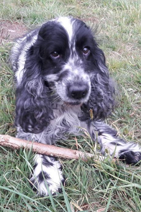 'Weg met de hondenbelasting in Grave, volgend jaar al'