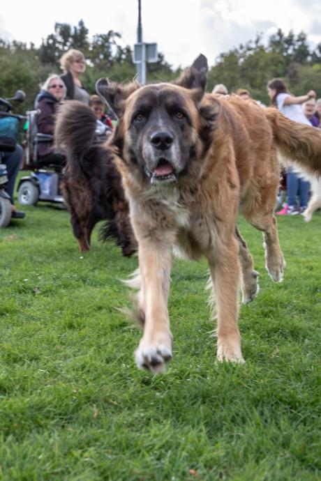 Baasjes en viervoeters dolgelukkig met hondenspeelplaats in Goes