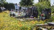 """""""Verwilderen? Nee, onze begraafplaatsen bloeien"""""""