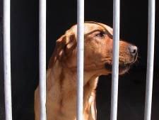 Genemuidenaar wil niets weten van slechte zorg voor zijn honden: 'Maar die beesten poepen twintig keer per week. En één keer dun'