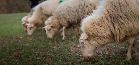 'Laat consument bij de boer kopen, niet bij de supermarkt'