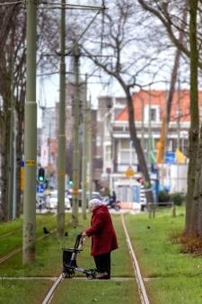 'Kastanjes Scheveningseweg illegaal door stad gekapt'