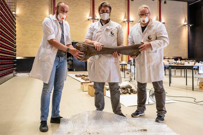 Momenteel wordt er in het centrum druk gewerkt aan de herstelling van de botten.