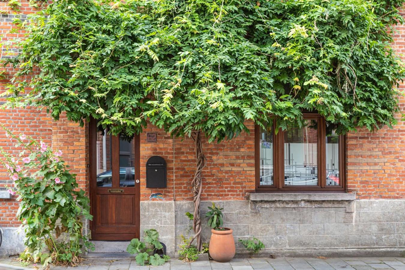 Voorbeeld van een geveltuin in Gent.