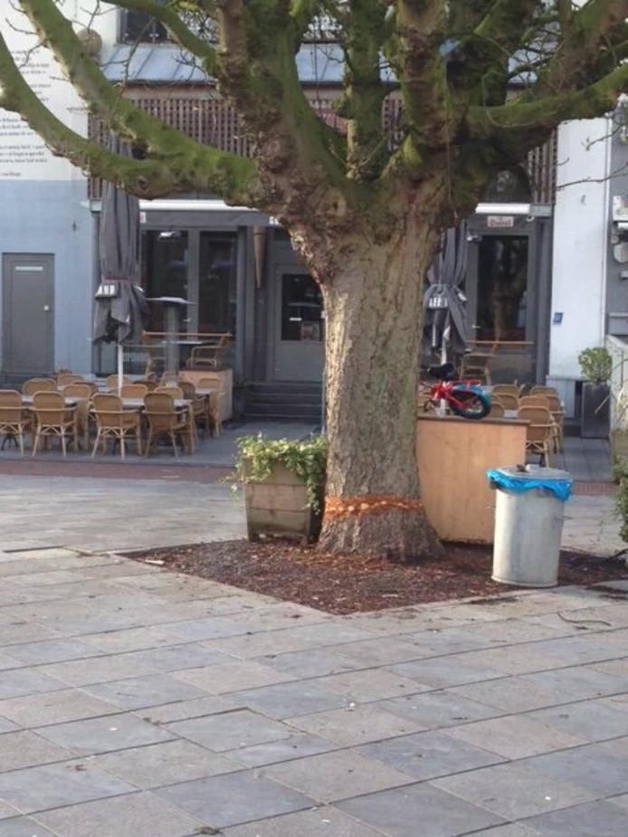De vernielde boom op het Tympaanplein in Middelburg.