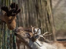 'Dierbaar dubbelzinnig' onderzoek in Burgers' Zoo
