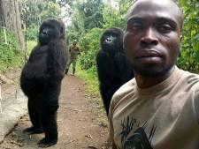 Deux gorilles prennent la pose avec un ranger