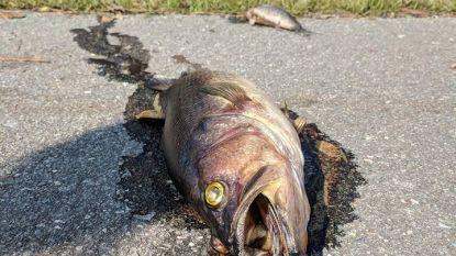 Orkaan Florence laat dode vissen achter op snelweg