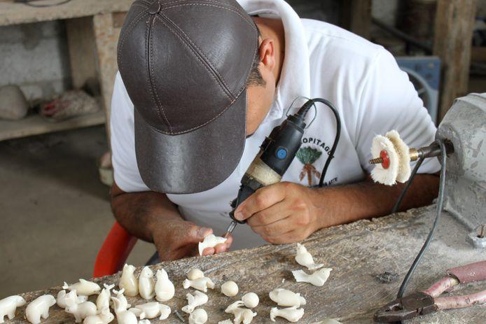 Nederlander Onno Heerma kweekt palmbomen die Tagua zaden afgeven. De zaden worden bewerkt tot bijna op ivoorlijkende sieraden.