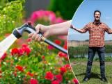 Hoe weet je dat het tijd is om je planten water te geven? Tuinexpert geeft advies