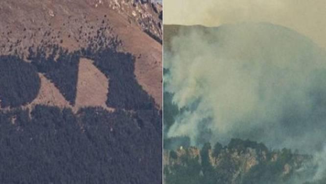 Bomenmonument voor Mussolini verwoest door bosbrand