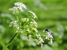 Rouwvliegenplaag op komst: dit doe je om ze in huis te bestrijden
