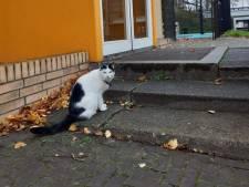 Spoorpark-kat Muis knuffelt graag met iedereen in zijn 'achtertuin'