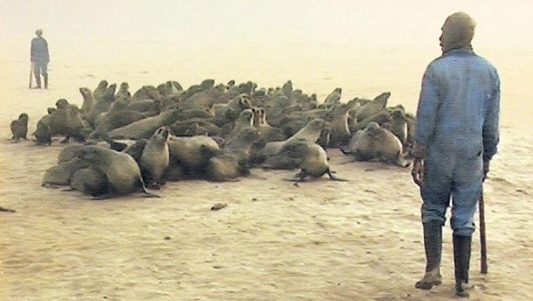 Namibische jagers hebben de pelsrobben bijeengedreven en staan klaar om ze dood te knuppelen. ©AP Beeld
