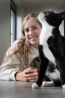 Gastgezinnen voor katten gezocht: 'Sommigen katten zijn niet geschikt als schootkat'