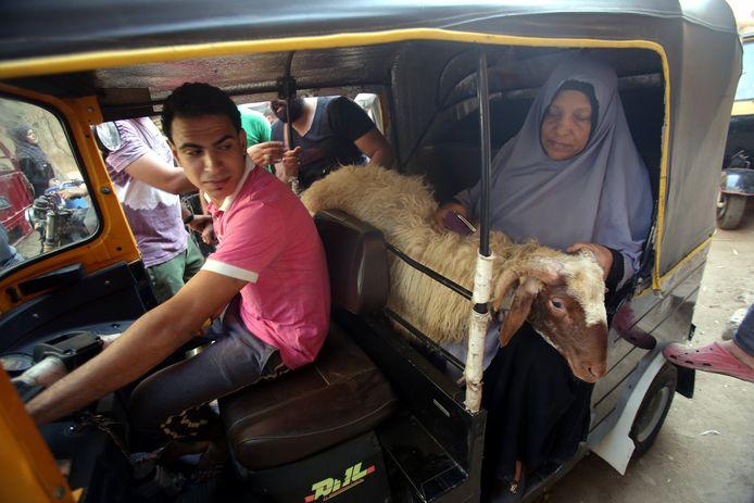 Een beetje krap allemaal, maar deze dame en haar offerschaap passen prima in dit knusse voertuig. Giza, Egypte.