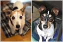 De twee hondjes van Conny en Jacques, Aysha en Laila.