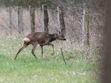 Eenoog in natuurgebied Buurserzand is weer klaar voor de strijd