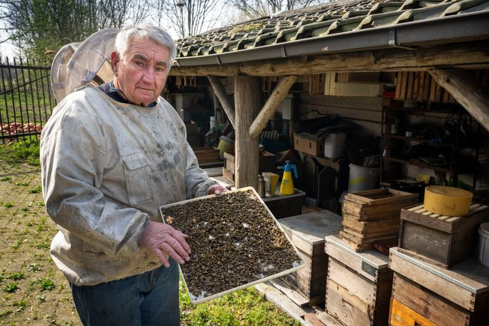 Nederland,  Lennisheuvel, imker Ad van  Esch bij zijn dode bijen.