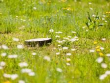 Oosterbeek krijgt een natuurbegraafplaats, want daar is veel vraag naar