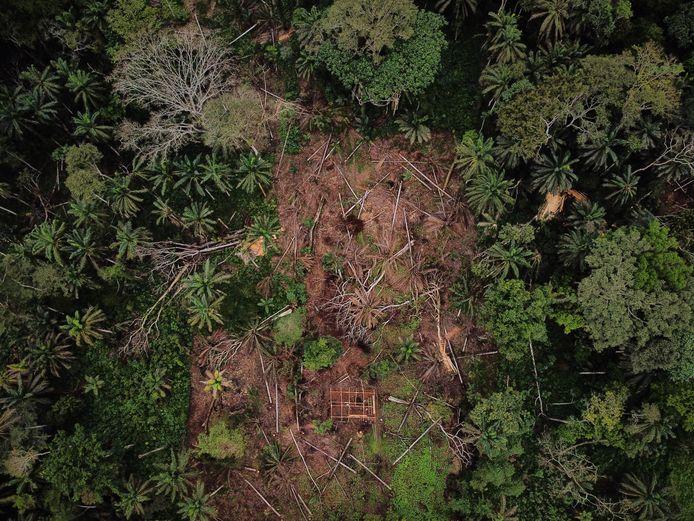 Een luchtfoto van boskap in het bergwoud in Ituri. Het leefgebied van de chimpansees wordt steeds kleiner omdat bossen gekapt worden om onder meer maniok, bonen en pinda's te kweken.