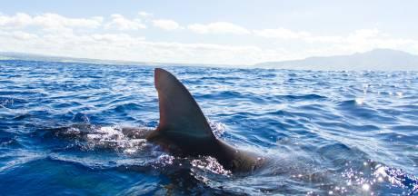 Un baigneur tué par un requin au large de la Nouvelle-Calédonie