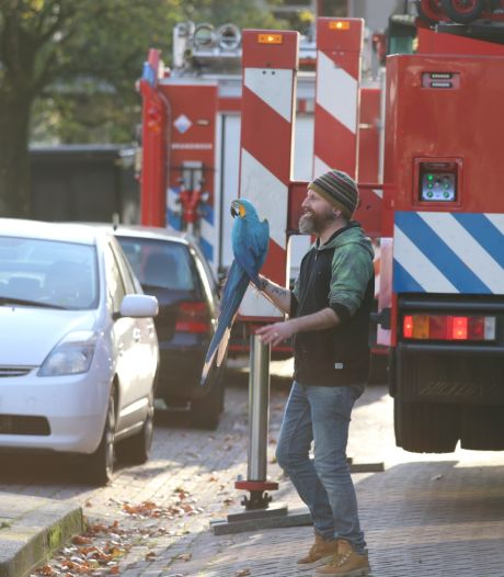 Papegaai Bibi zit 26 uur in een boom in Apeldoorn: 'Ik was wel even bang dat hij werd gepakt door een roofvogel'