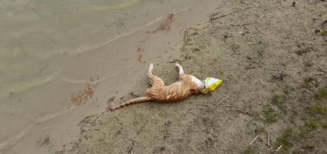Katje gestikt in zak chips, omwonenden recreatieplas furieus: 'Gebied dicht tot puinhoop is opgeruimd'